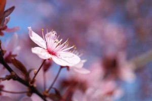 image-オフィスデリスタッフの活動日記【3/11~3/15】 | オフィスセラピストの活動日記