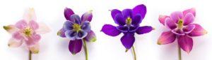 image-オフィスデリスタッフの活動日記【5/20~5/24】 | オフィスセラピストの活動日記