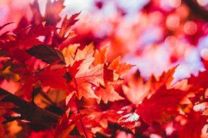 image-オフィスデリスタッフの活動日記【10/21~10/25】 | オフィスセラピストの活動日記