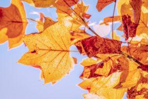 image-オフィスデリスタッフの活動日記【11/18~11/22】 | オフィスセラピストの活動日記